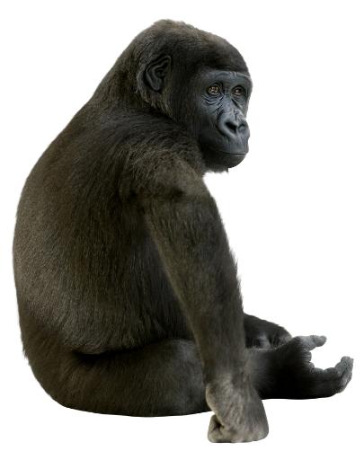 AMC Gorilla